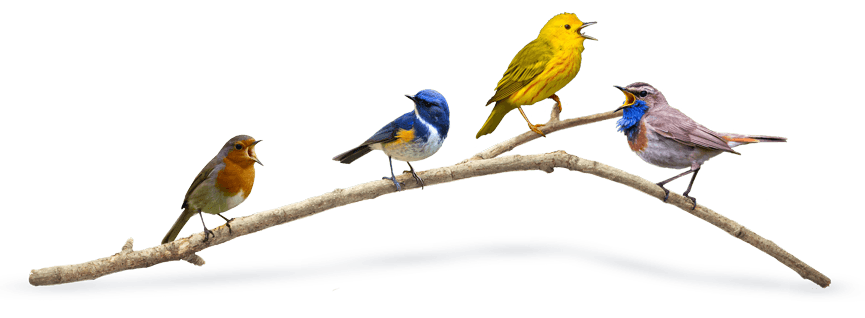 Birds On A Branch | Brand Identity | Branding Your Business | Pixel Positive